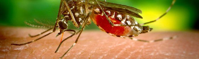 yellow fever information for travelers
