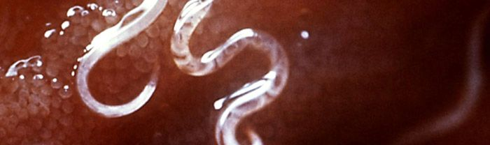 hookworm prevention and treatment
