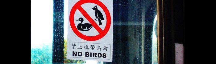 avian bird flu and the traveler