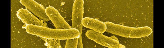 how to avoid salmonella